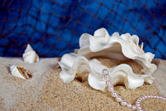 Oyster Opulence Royalty Free Stock Photo