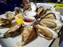 Oyster Royalty Free Stock Photography