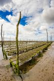 Oyster park in the Arcachon basin. Oyster park in the center of the Arcachon basin on the island with birds Stock Image