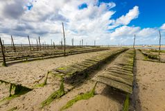 Oyster park in the Arcachon basin. Oyster park in the center of the Arcachon basin on the island with birds Stock Photo