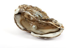 Oyster with pearl. Oyster with parl, culinary food with luck of finding jewelry royalty free stock image
