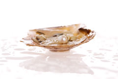 Oyster Pearl. Pearl inside an oyster shell Stock Photo