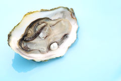 Oyster with a pearl on blue background- shallow DOF Stock Photography