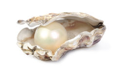 Oyster and pearl. Concept of wealth or winning with a oyster shell open with a large pearl inside isolated on a white background