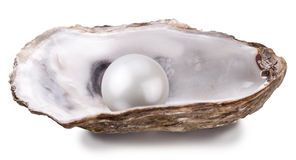 Oyster with pearl isolated. Open oyster with pearl isolated on white background Stock Image