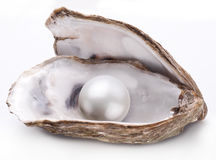 Oyster with pearl isolated. Royalty Free Stock Images
