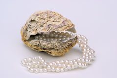 Oyster with pearl necklet Royalty Free Stock Photo