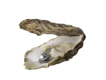 Oyster. Pearl in oyster shell isolated Stock Images