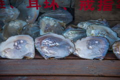 Oyster pearl shell royalty free stock images