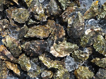 Oyster Pile stock image
