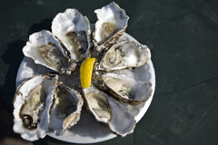 Oyster on the plate Stock Photography