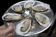 Oyster on plate Royalty Free Stock Photos