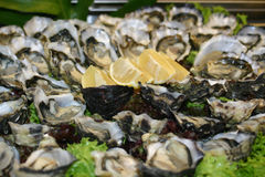 Oyster Platter Stock Photo