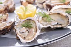Oyster platter Stock Photo