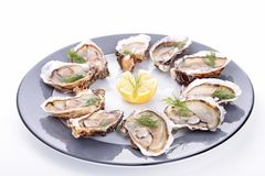 Oyster platter Stock Photography