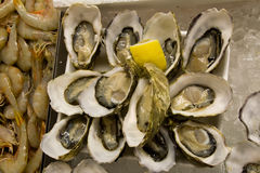 Oyster Raw Royalty Free Stock Photography