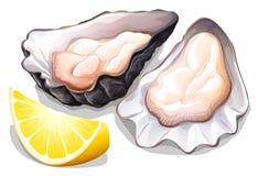 Oyster vector illustration