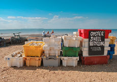 Oyster recycling in Whitstable Stock Image