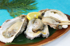 Oyster. It is a rock oyster produced in Japan Stock Photo