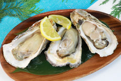 Oyster. It is a rock oyster produced in Japan Royalty Free Stock Photo
