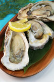 Oyster. It is a rock oyster produced in Japan Stock Photos