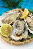 Oyster. It is a rock oyster produced in Japan Royalty Free Stock Photography