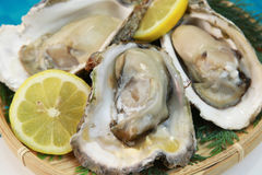 Oyster. It is a rock oyster produced in Japan Royalty Free Stock Image