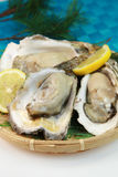 Oyster. It is a rock oyster produced in Japan Royalty Free Stock Images
