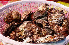 Oyster for sale Royalty Free Stock Photo
