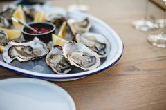 Oyster. Sea oysters with lemon on ice Stock Images