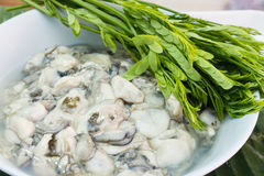 Oyster seafood fresh and delicious Stock Photography
