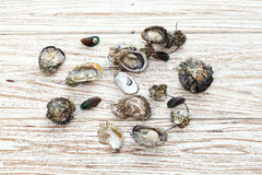Oyster seafood fresh mussel asia wood background Stock Photos
