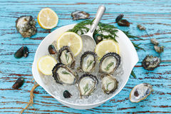 Oyster seafood lemon dill fresh mussel asia appetizer Royalty Free Stock Photography