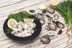 Oyster seafood lemon fresh mussel asia appetizer Royalty Free Stock Image