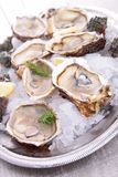 Oyster served in ice Stock Photos