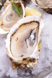 Oyster served in ice Royalty Free Stock Images
