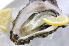 Oyster served on ice with lemon Stock Photography