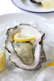 Oyster served on ice with lemon. Japanese summer oyster served on ice with lemon Royalty Free Stock Photo