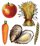 Oyster sheaf   wheat spike carrots figure apple. Clam shell fruit bread   delicacy Stock Images