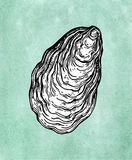 Oyster shell ink sketch Stock Photography