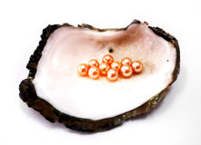 Oyster shell with orange pearls Royalty Free Stock Photos