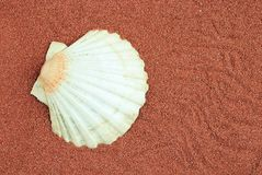 Oyster shell over red sand. Useful as background Stock Images