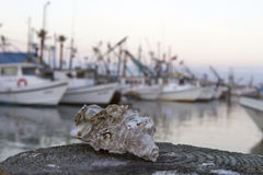 Oyster Shell and Oyster Boats Stock Photography