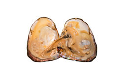 Oyster Shell and Pearl, isolation Royalty Free Stock Image