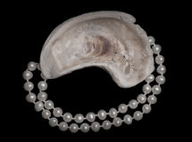 Oyster shell and a pearl necklace Stock Photography