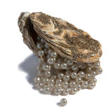 Oyster shell with pearls Royalty Free Stock Photo