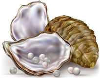 Oyster shell pearls Royalty Free Stock Photo