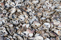 Oyster Shell Pile Royalty Free Stock Photos