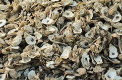 Oyster Shell Pile Royalty Free Stock Images