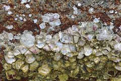 Oyster shell on stone open matte mother-of-pearl surface marine design wild flora marine life background stock images